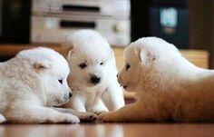 Secret doggy meeting