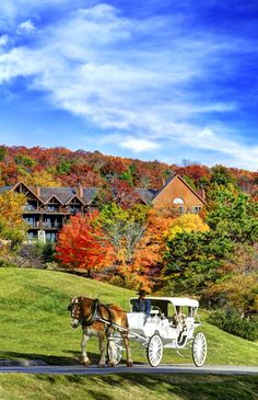Big Cedar Lodge 2900 in Ridgedale, MO