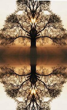 espelhando a natureza em outono