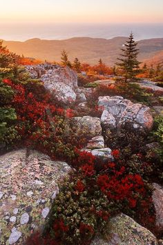 Fall color - Cadillac Mountain at sunrise, Mount Desert Island, Acadia National Park, near Bar Harbor, Maine USA Acadia National Park, National Parks, Beautiful World, Beautiful Places, Beautiful Scenery, Foto Nature, Places To Travel, Places To Visit, Parque Natural