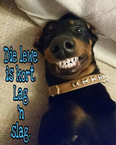 Afrikaans, Love Notes, True Words, Sayings, Quotes, Mac, Stuff To Buy, Friends, Board