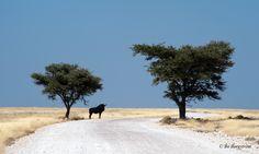 Ethosha National Park *Namib*