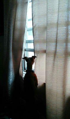 Keeping an eye on the neighborhood