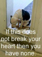 SHELTER DOGS - for God's sake, adopt, don't buy - every time you buy, a shelter dog dies.
