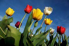 Letöltöttük a tavaszt: 10 tavaszi háttérkép