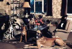 How many dogs can you see?