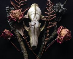 • roadkillandcrows: Skulls and dried flowers.