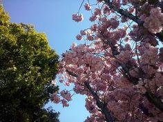 Support for Smallbiz : Blütenpracht in Gumpoldskirchen