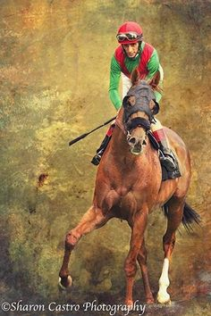 Horse is a horse of course unless it's an Amazing Equine Athlete that earns Money  Then it's a Stud. Or a broodmare !!  Support Thoroughbred Horse Racing its dying !!