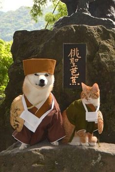 Shiba with cat Animals And Pets, Funny Animals, Cute Animals, Shiba Inu, Japanese Dogs, Cute Creatures, Funny Dogs, Cute Puppies, Cats And Kittens