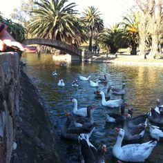 Lago Parque Rodó. Montevideo - Uruguay