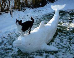 【画像】これは凄い!! 真っ白なイルカの背中に得意げに乗る猫 : 〓 ねこメモ 〓