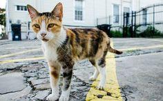 Gato de rua. Um quinto dos donos de gatos machos no Brasil afirmam não castrar os animais -- e sua população cresce muito mais rapidamente que a de cães (Foto: Thinkstock)