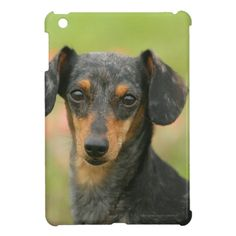 Smooth-haired Miniature Dachshund Puppy Looking at iPad Mini Case dachshund cross stitch, celebrities with dachshunds, long hair dapple dachshund Dapple Dachshund Puppy, Dachshund Puppies For Sale, Baby Dachshund, Dachshund Shirt, Dachshund Gifts, Funny Dachshund, Daschund, Chihuahua Dogs, Pet Dogs