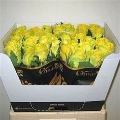 Rose Penny Lane is a lovely Yellow cut flower - s. As a rule of thumb, the taller the stem the larger the flower head & longer the vase life. July Flowers, Fresh Flowers, Most Popular Flowers, Wholesale Roses, Rose Varieties, Flower Packaging, Florist Supplies, Penny Lane, Flowers Delivered