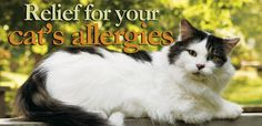 itchy skin and allergy relief for cats