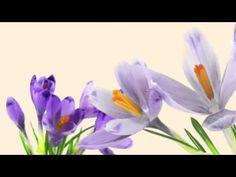 Make a friend smile with Tassimo - Flower Firework #Tassimo #TouchSipSmile #thankyou #merci #gracias #danke