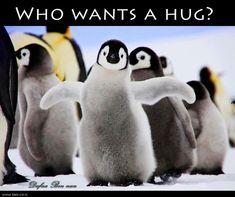 Penguin Socks, Penguins Of Madagascar, Cute Penguins, Pittsburgh Penguins, Quad, Cute Animals, Instagram, Fotografia, Pretty Animals