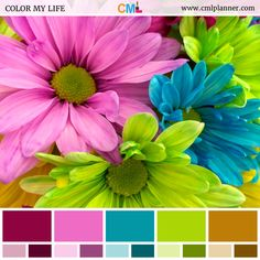 Today's dose of color inspiration is an exciting color palette featuring a close-up of brightly colored pink, blue, and green daisies. #colorpalette #colorpaletteinspiration #colorpalettes #colors #colorsplash #colorscheme #colorstyle #colorsync #colorsoftheweek #ColorStudy #colorsoftheday #design #inspiration #designinspiration #color #colorful
