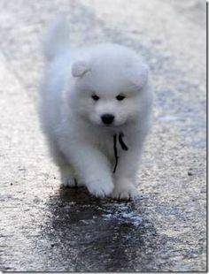 fluffy cute puppy