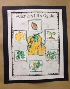 Pumpkin life cycle!