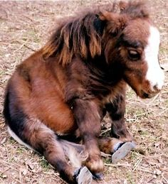 Adorable dwarf mini (notice the hooves with braces