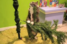 Tree Decorating 101. Iris and Fern demonstrate how to assemble and decorate a christmas tree.