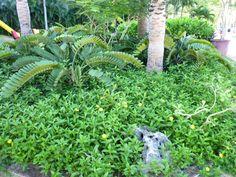 """""""Outrigger Guam Resort""""(Hotel), Guam"""