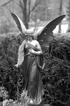angel BW 6 by Pierre the III, via Flickr