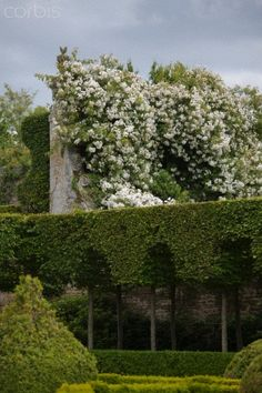 Roses growing on Wall in French Garden