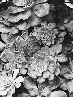 Succulents | graz15 | VSCO