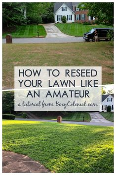 When People with No Idea What They're Doing Reseed a Lawn -