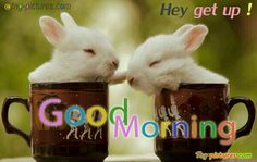 490 Best Good Morning Images In 2019 Good Morning Bonjour Good