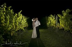 willow creek winery reception, cape may nj, bride and groom night shot in vineyard