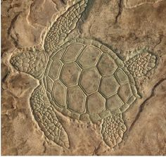 Beautiful sea turtle stamped into concrete! Concrete Tools, Concrete Crafts, Stamped Concrete, Outside Living, Outdoor Living, Florida Design, Brick And Wood, Dream Pools, Decorative Tile