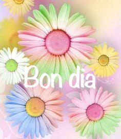 Fruit, Daisy Flowers, Portuguese, Beatles, Gifs, Morning Messages, Cute Good Morning Images, Modern Floral Arrangements, Flower Arrangements