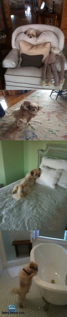 See more http://funny-house.com