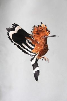 Intricate Paper Bird Sculptures   Diana Beltran Herrera inspiration