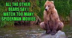 Spiderbear, Spiderbear, does whatever a Spiderbear does... | ALL THE OTHER BEARS SAY I WATCH TOO MANY SPIDERMAN MOVIES | image tagged in spider bear,memes,funny animals,animals,funny,bear | made w/ Imgflip meme maker