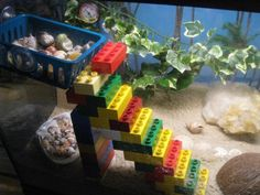 Good Crabitats - Hermit Crabs can have lego stairs!