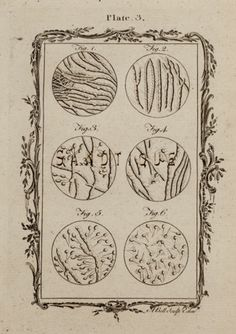 "Buffon's ""Natual History"" - ""SPERM - PLATE 3"" - Copper Engraving - 1785 $15.99"
