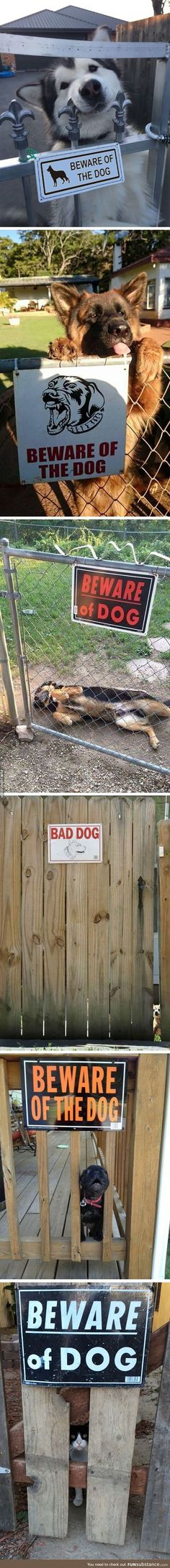 Beware of the dog,jajaja too cute to be true