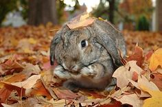 Bunny in leaves