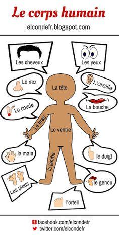 French vocabulary: body parts – le corps humain Plus French Language Lessons, French Language Learning, French Lessons, Spanish Lessons, Spanish Language, Learning Spanish, Spanish Activities, Dual Language, Learning Italian