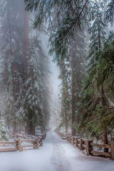 Hiver - neige *m Winter Sequoia Trees California Winter Love, Winter Snow, Winter Walk, Winter Green, Fall Winter, Winter Wonderland, Christmas Wonderland, Beautiful World, Beautiful Places