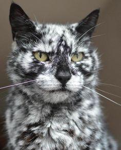 Scrappy vieux chat au pelage marbré étonnant  2Tout2Rien