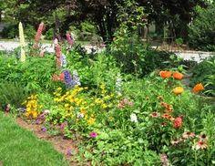 Fetner perennial poppy Garden