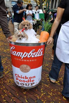 """Chicken """"Poodle"""" Soup - Halloween Pet Parade - Southernliving. Dolce and Vita    Owner: Ashley Rondini"""