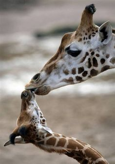 Mother's Day In the Animal World