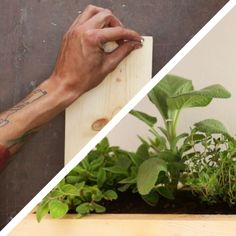 Start Your Garden At Home And Make This Ten Dollar Herb Planter